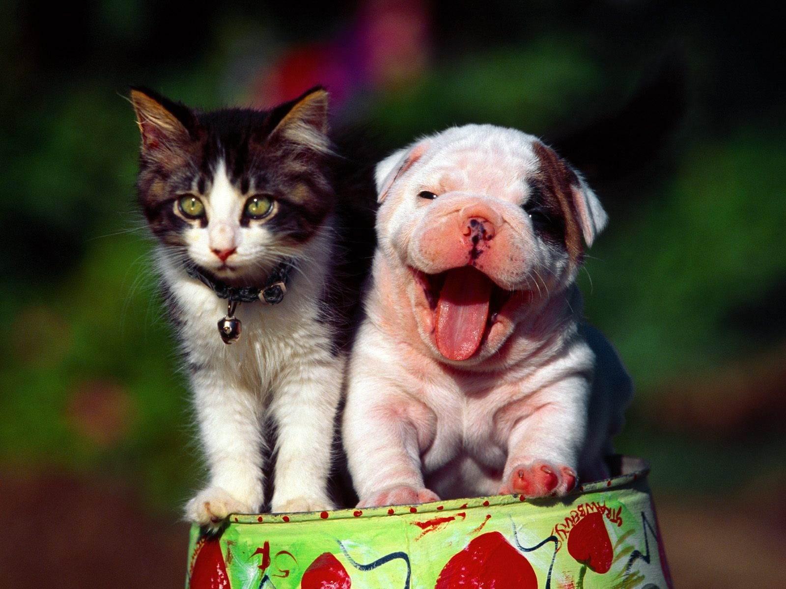 Kediler Köpekler ve Google