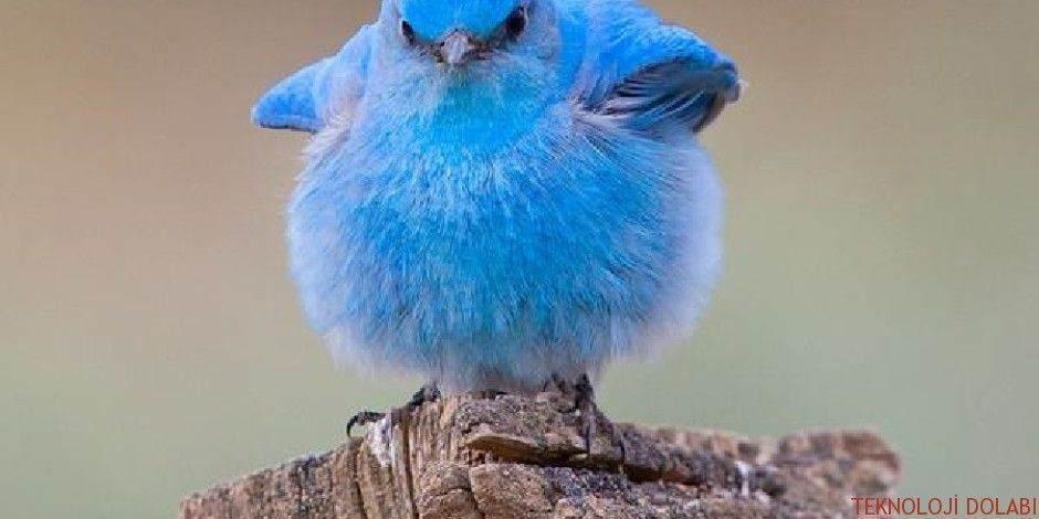 Twitter alemi benden sorulur diyenlerin aşık olacağı 10 servis 1