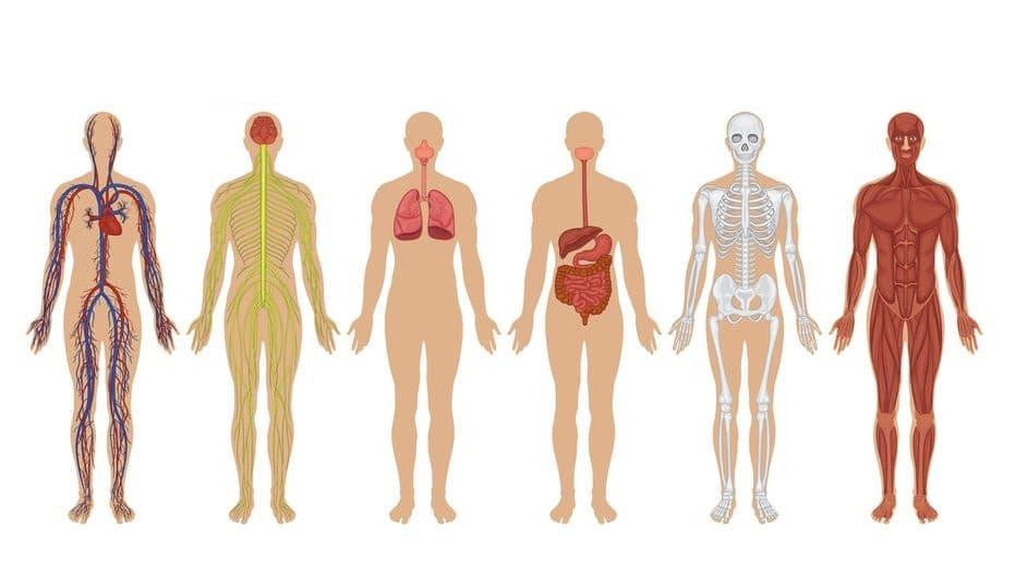 İnsan Vücudu İle İlgili 100 İlginç Gerçek