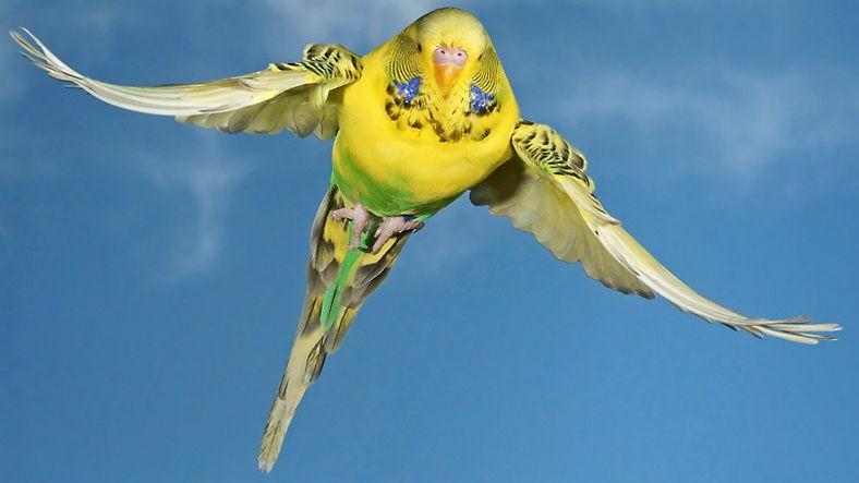Kuşlar Havada Uçarken Neden Birbirleriyle Çarpışmıyorlar ?