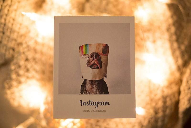 Instagram'da Takip Edilesi 14 Evcil Hayvan